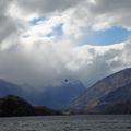 Hawk at Lake Wanaka