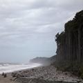 Beach Sentinels off Haast Highway