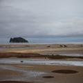 Horses on Abel Tasman Beach