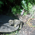 Tuatara — NOT a Lizard
