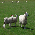 Twins with Ewe