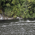 Dolphins in Doubtful Sound, 2