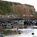 Penguin Wading