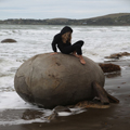 Taking a Turn on a Moeraki Boulder