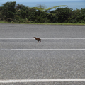 Why'd the Weka Cross the Road?