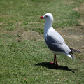 Gull in the Sun