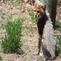 Cheetah Cub, 2