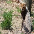 Cheetah Cub, 3