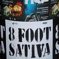 8 Feet High