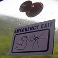 In Case of Emergency, Bulk Up